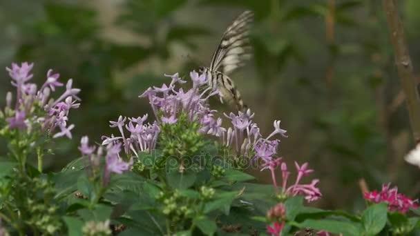 Motýli létají z nektar květin