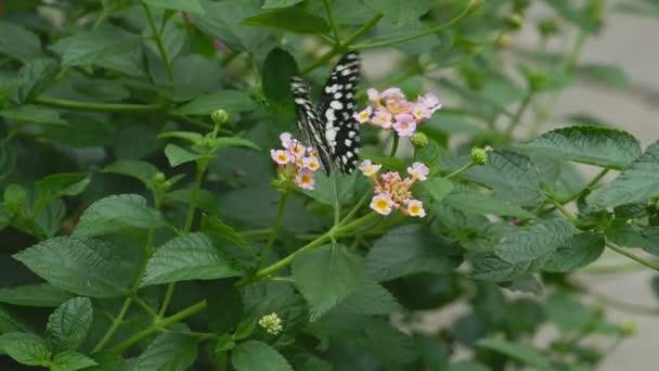 Butterflies fly from flower nectar