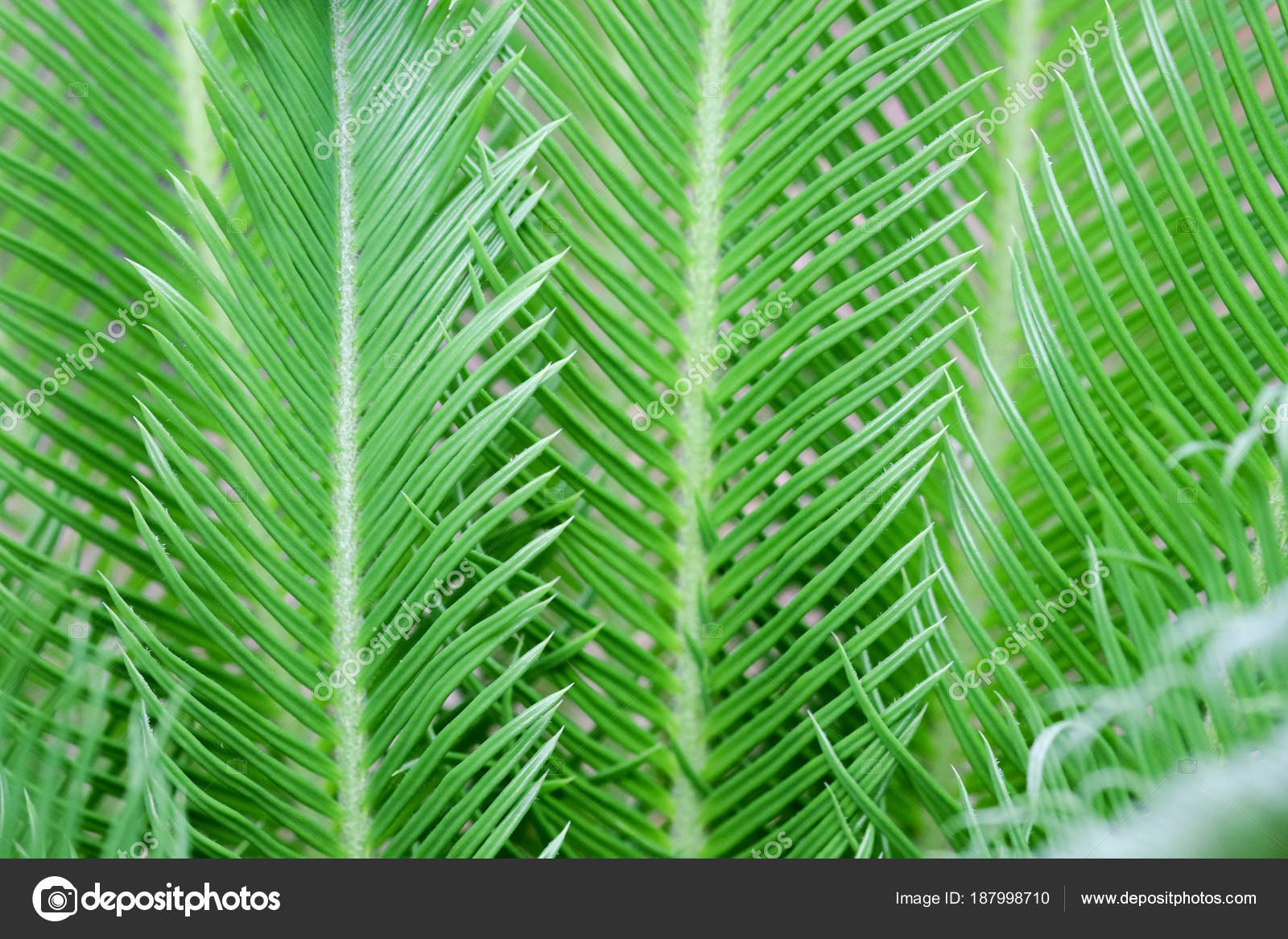 Wallpapers Greenery Nature Hd Natural Green Plants