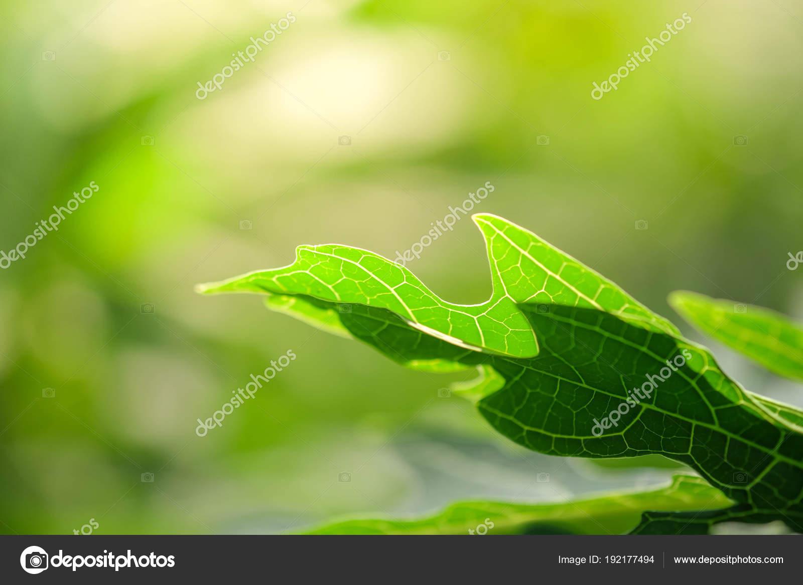Fond De Plantes Vertes Naturelles Ou Les Papiers Peints Vue De La