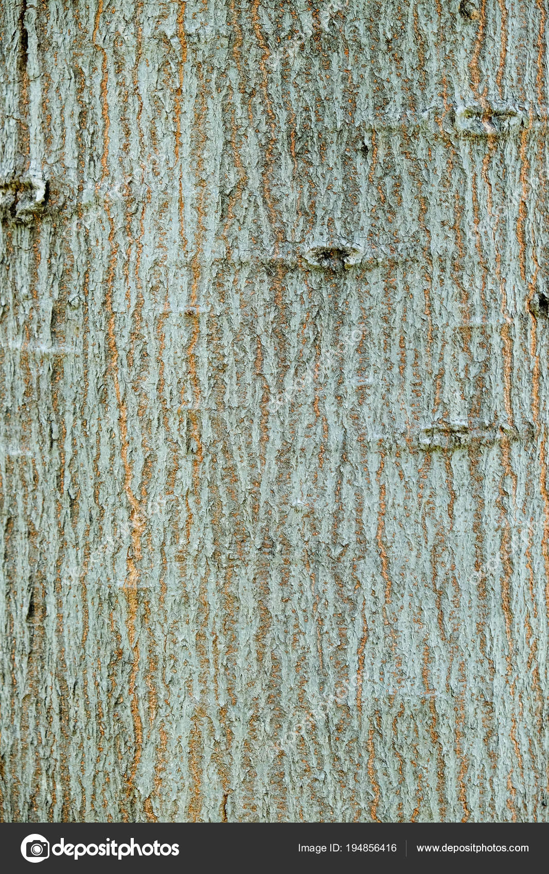 Tree bark wood texture abstract blue background — Stock Photo ...