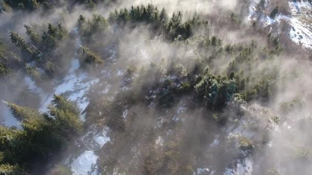Úžasná krajina s borovicový les v mlze