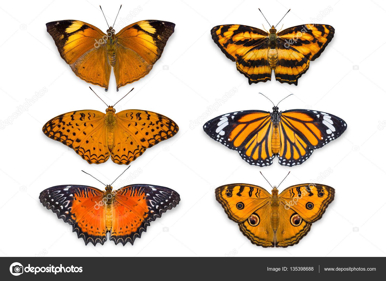 Imágenes: Mariposas Naranjas