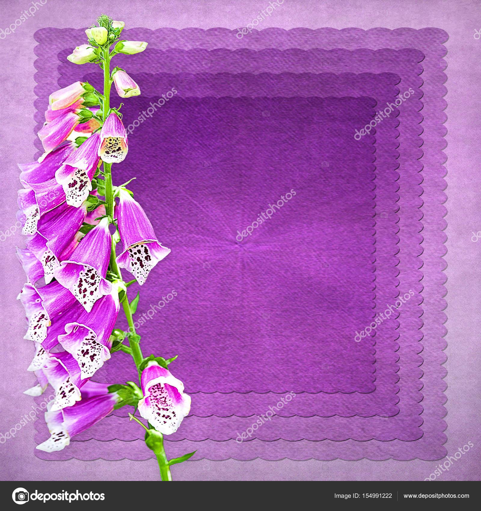 Lila Fingerhut Blume Hintergrund — Stockfoto © TrudyWilkerson #154991222