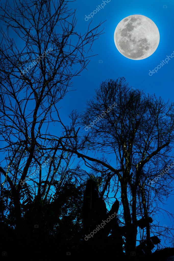 Blue Sky Full Moon But Not Blue Moon >> Silhouettes Of Dry Tree Against Sky And Beautiful Full Moon Stock