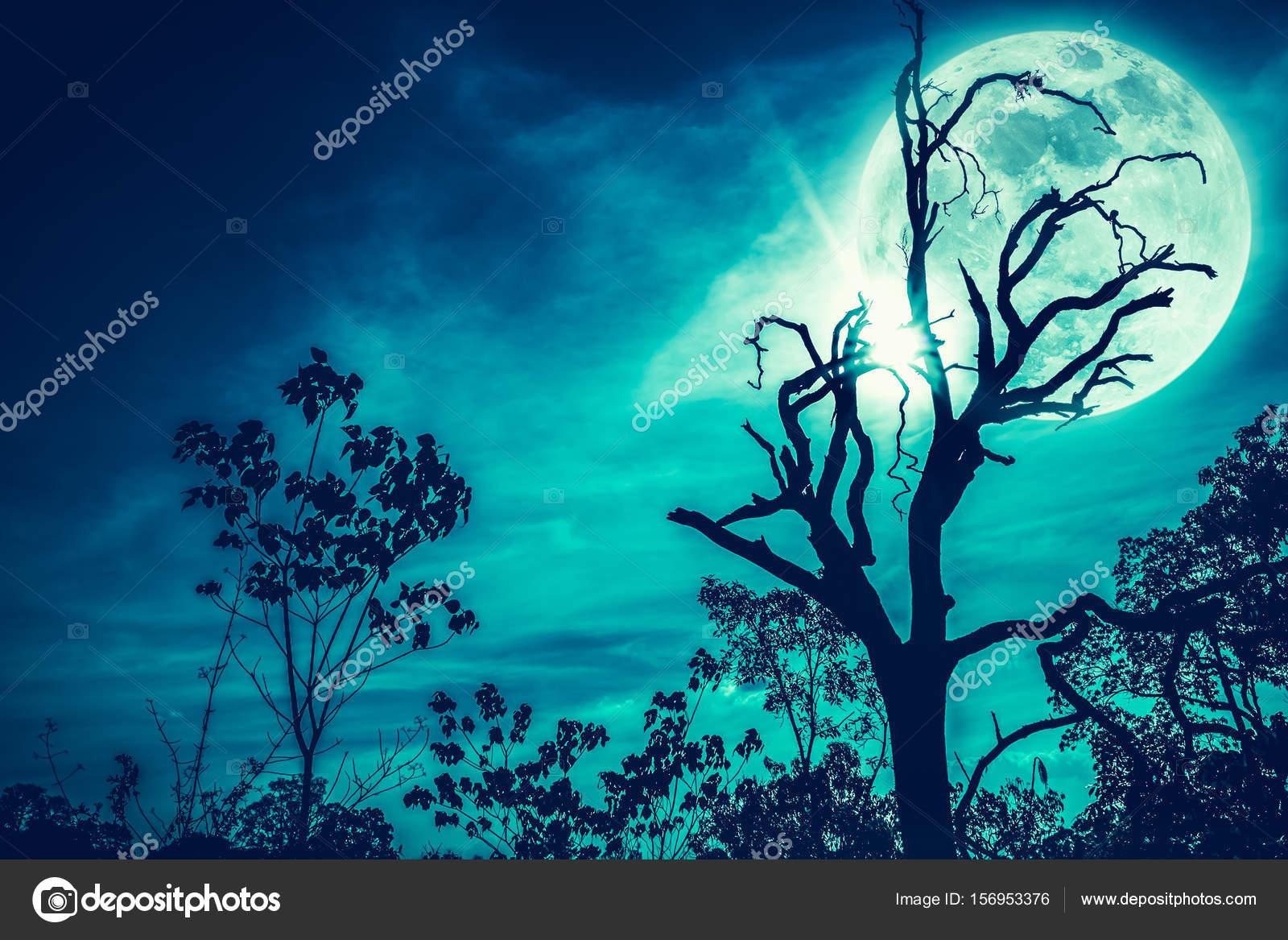 Fotos Super Bonitas De Paisajes Paisaje Nocturno Del Cielo Con La