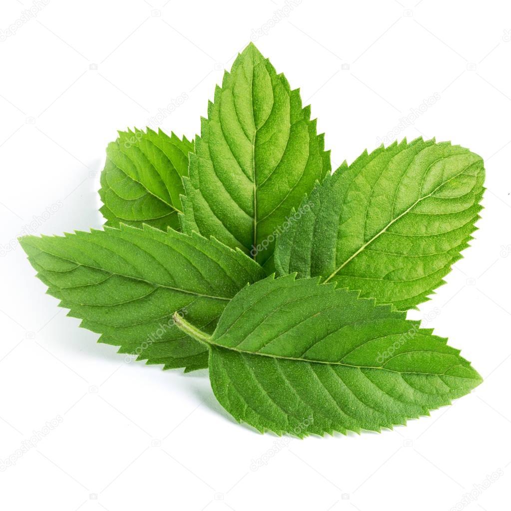 754c75337780 fresh mint leaves — Stock Photo © Maks Narodenko  128969718