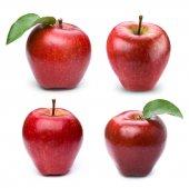 Apple gyümölcs-levél