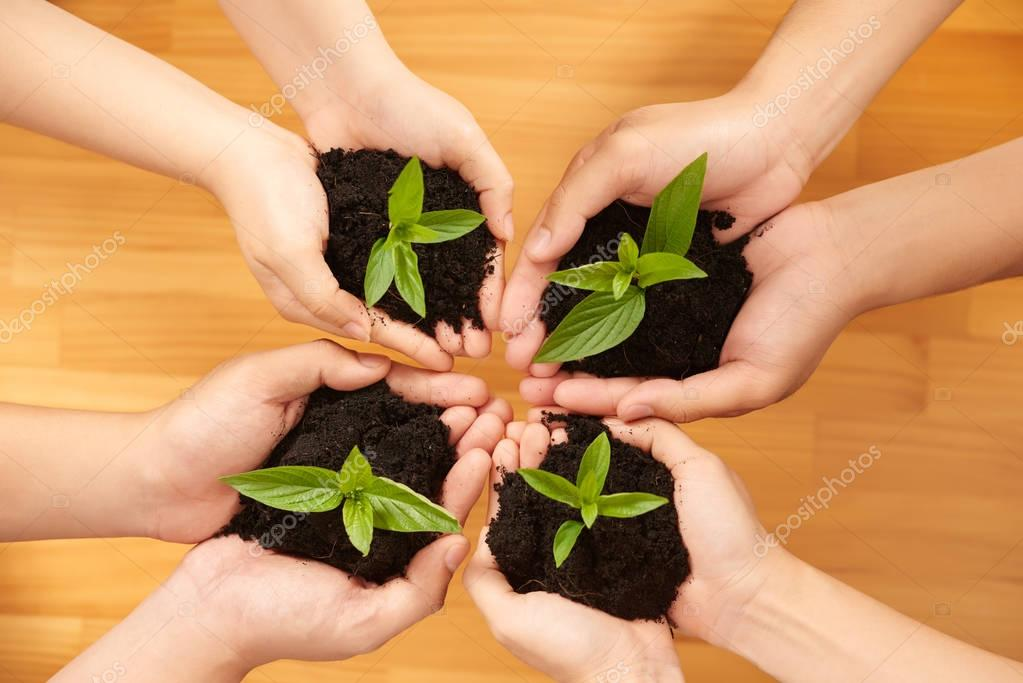 people holding soil with sprouts