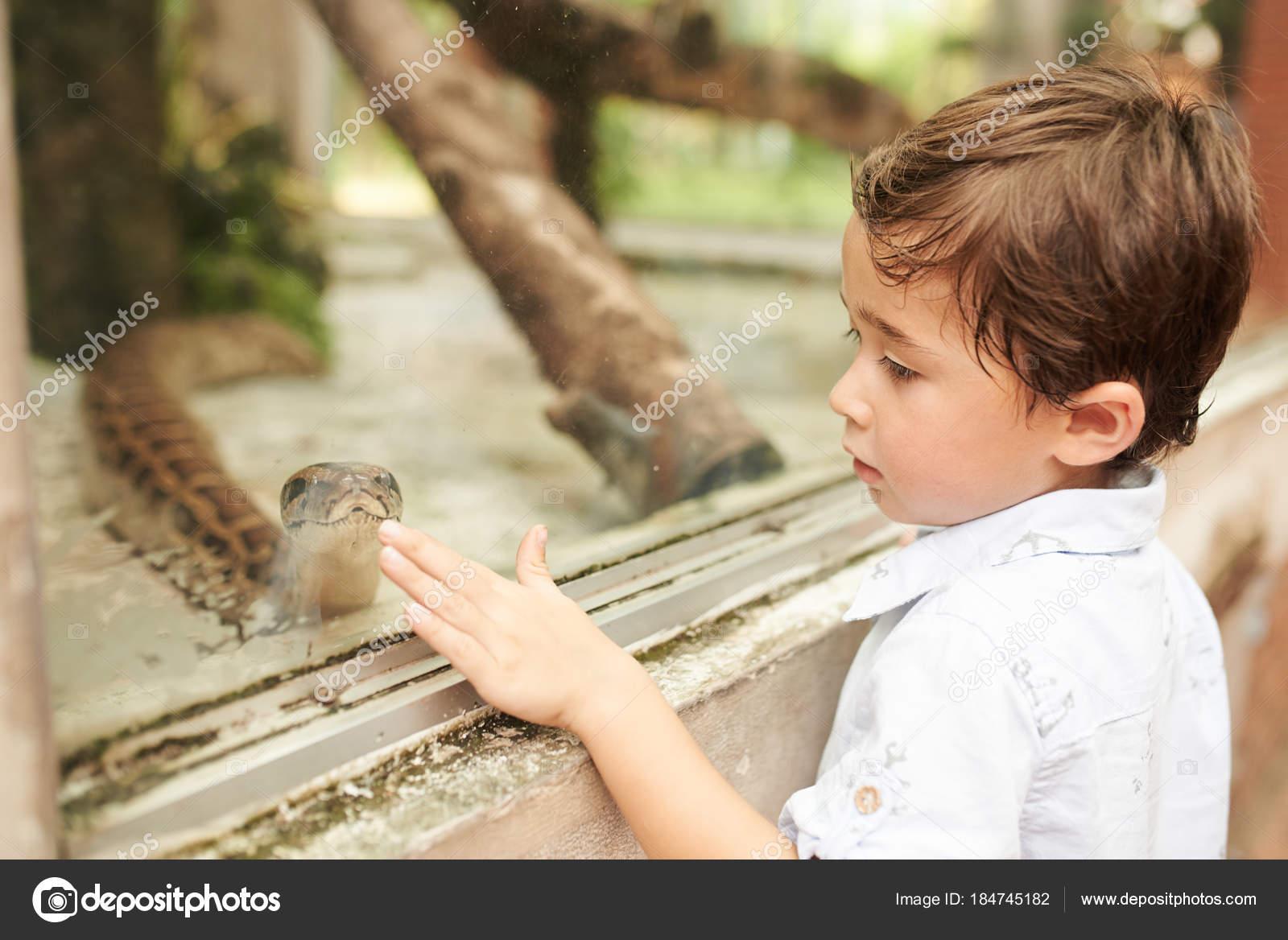 Little Boy Touching Glass Terrarium Big Snake Stock Photo