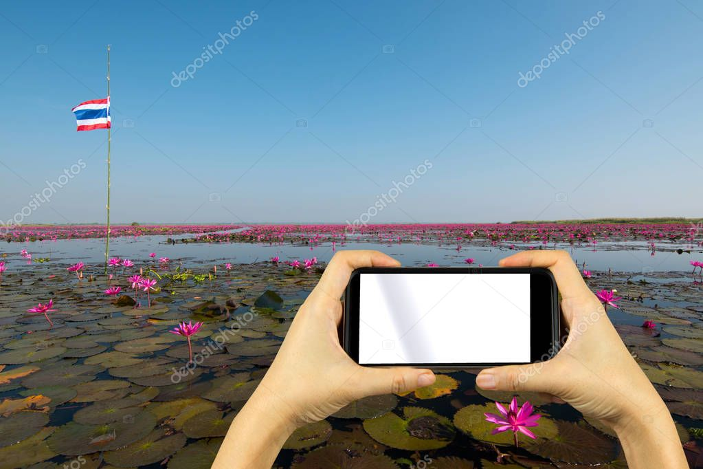 take photo by smartphone. lotus lake, Udonthani, Thailand