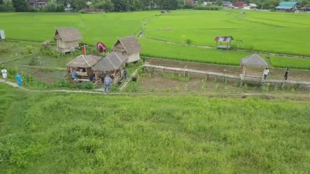 pua in field video