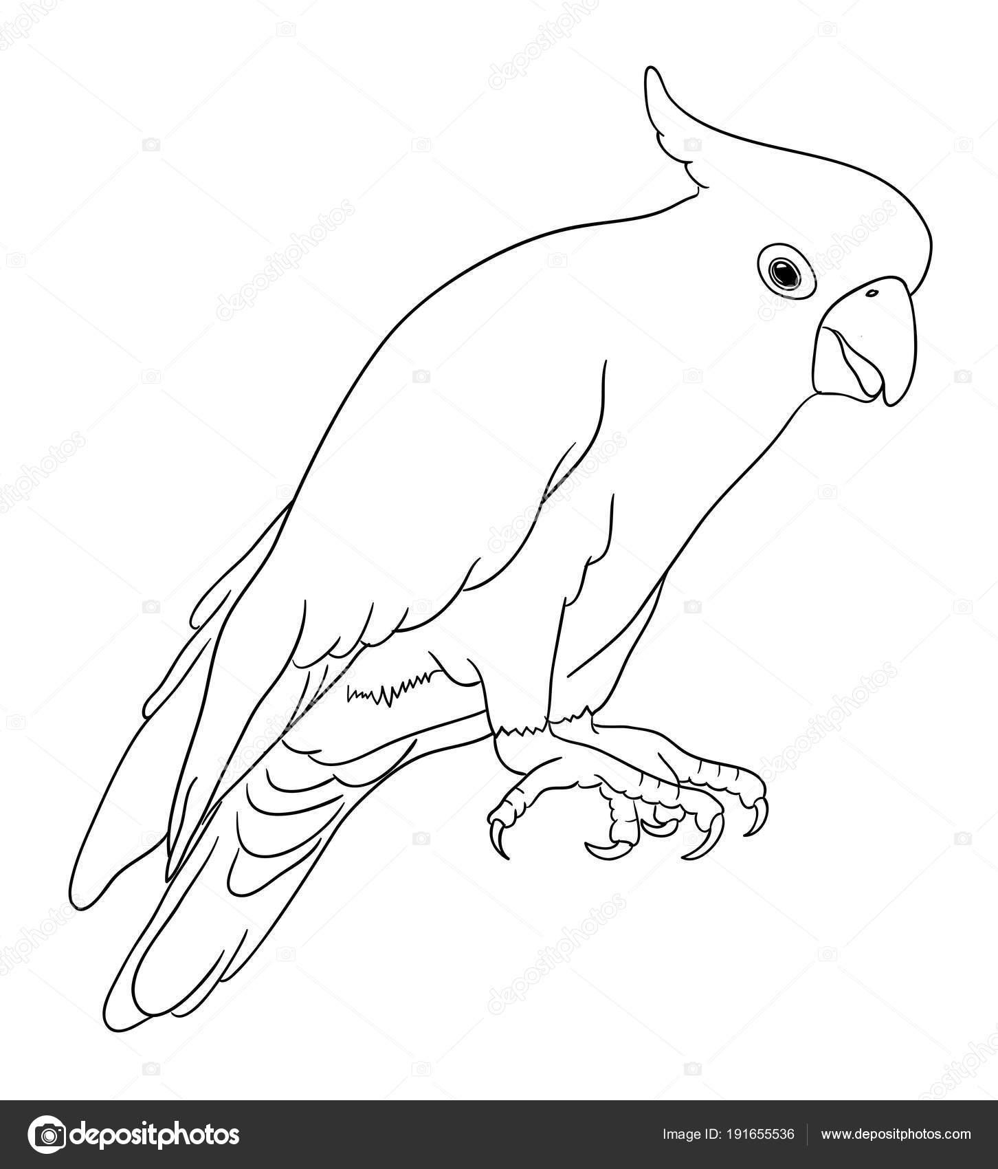 Imágenes Logotipo De Twitter Para Colorear Cacatúa Línea