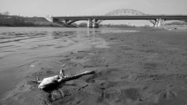 ekologická katastrofa na řece. mrtvá fauna