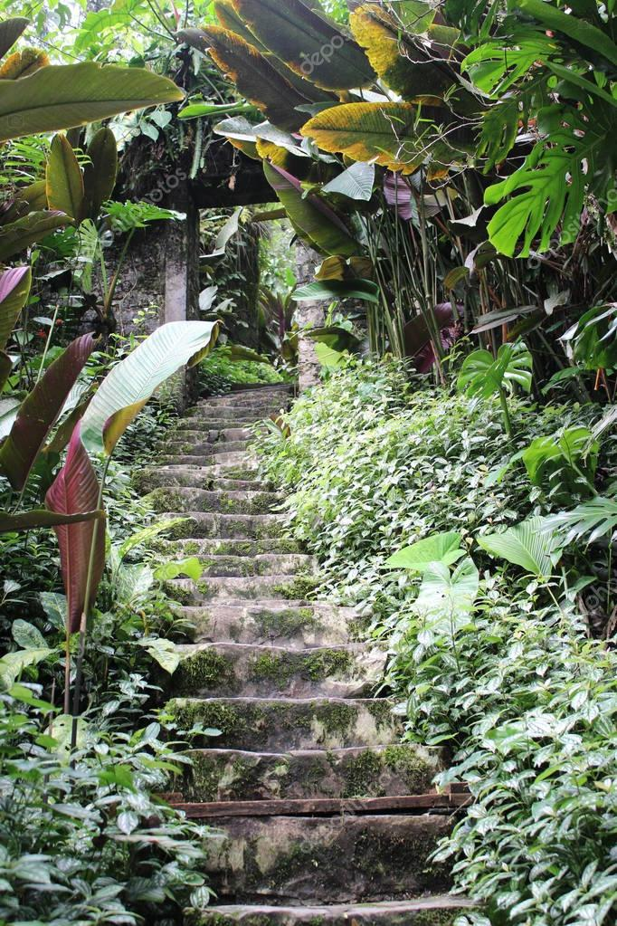 Stairs with nature in Mexico
