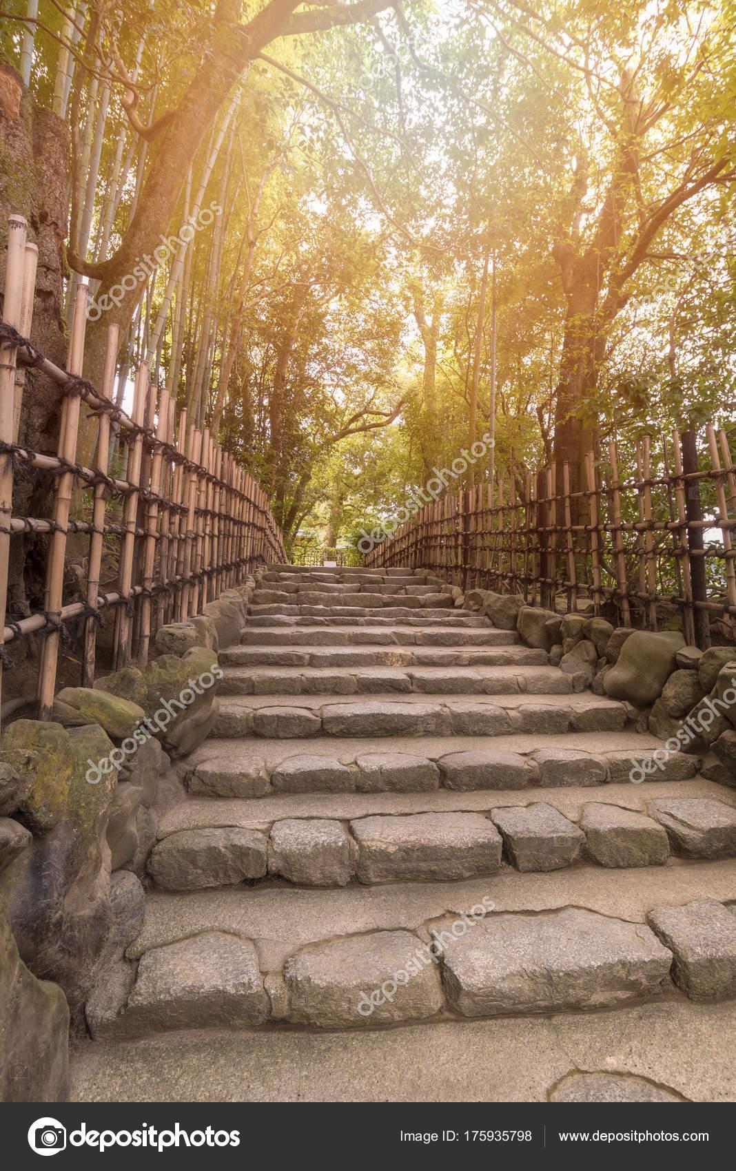 Beautiful nature bamboo grove in autumn season in japanese zen ...
