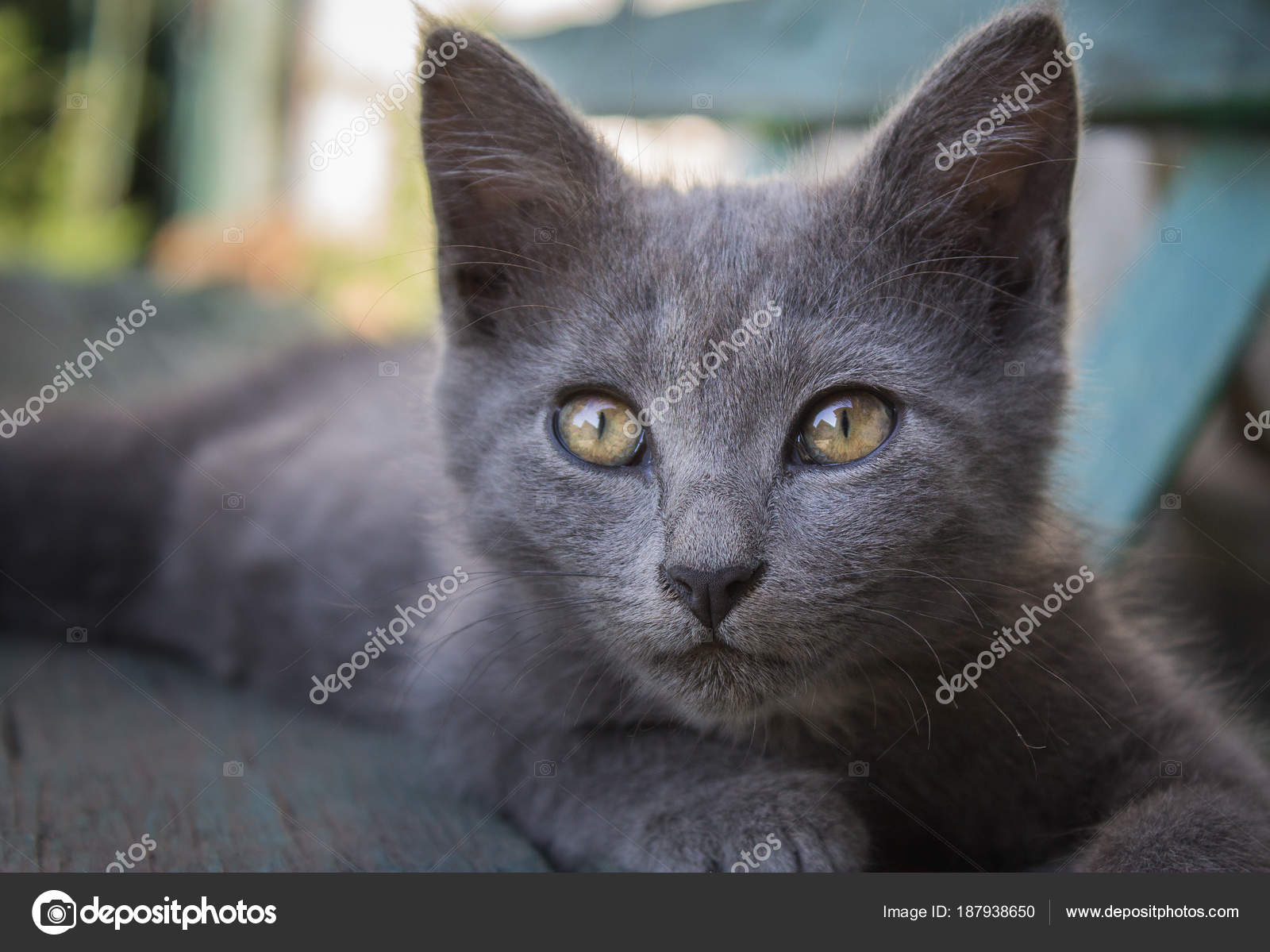 Gray Cat Big Eyes Ears Lies Bench Looks Intently Frame