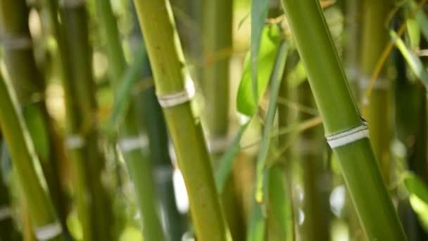 Natural bamboo canes
