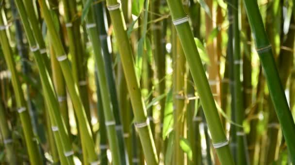 Přírodní bambusové hole