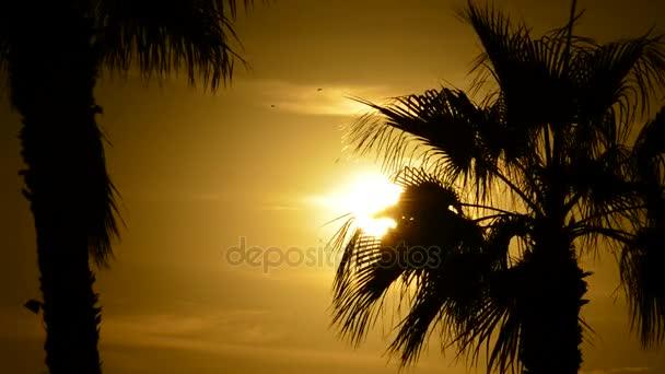 Slunce schovává mezi listy dlaně při západu slunce