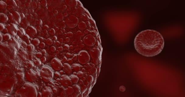 Animace z krvinek nebo červených krvinek v proudu v tepně lidského těla