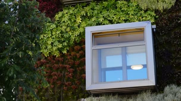 Okno v moderní budově s vegetací zdí. Zelené prostředí, příroda koncepce