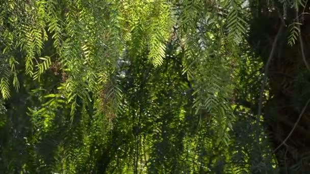 Zelené listy při západu slunce