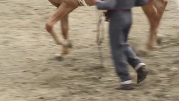Kůň a jezdec klusal a cválal na jezdecké výstavě