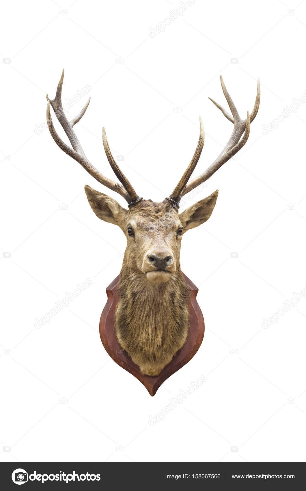 cabeza de ciervo disecado — Foto de stock © nirutdps #158067566