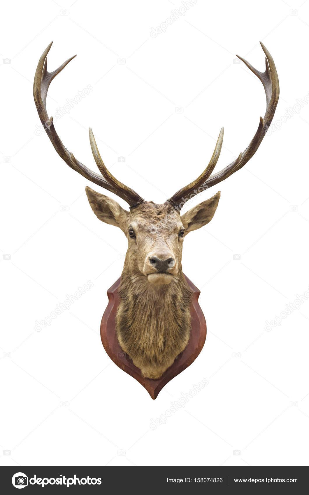 cabeza de ciervo disecado — Foto de stock © nirutdps #158074826