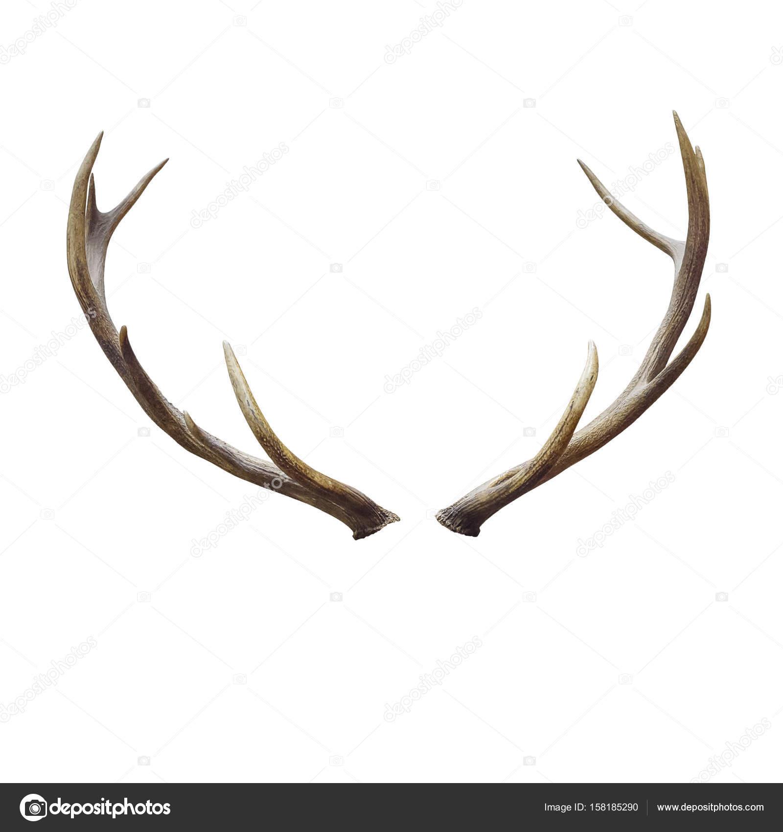 decoración de cuernos de ciervo — Foto de stock © nirutdps #158185290