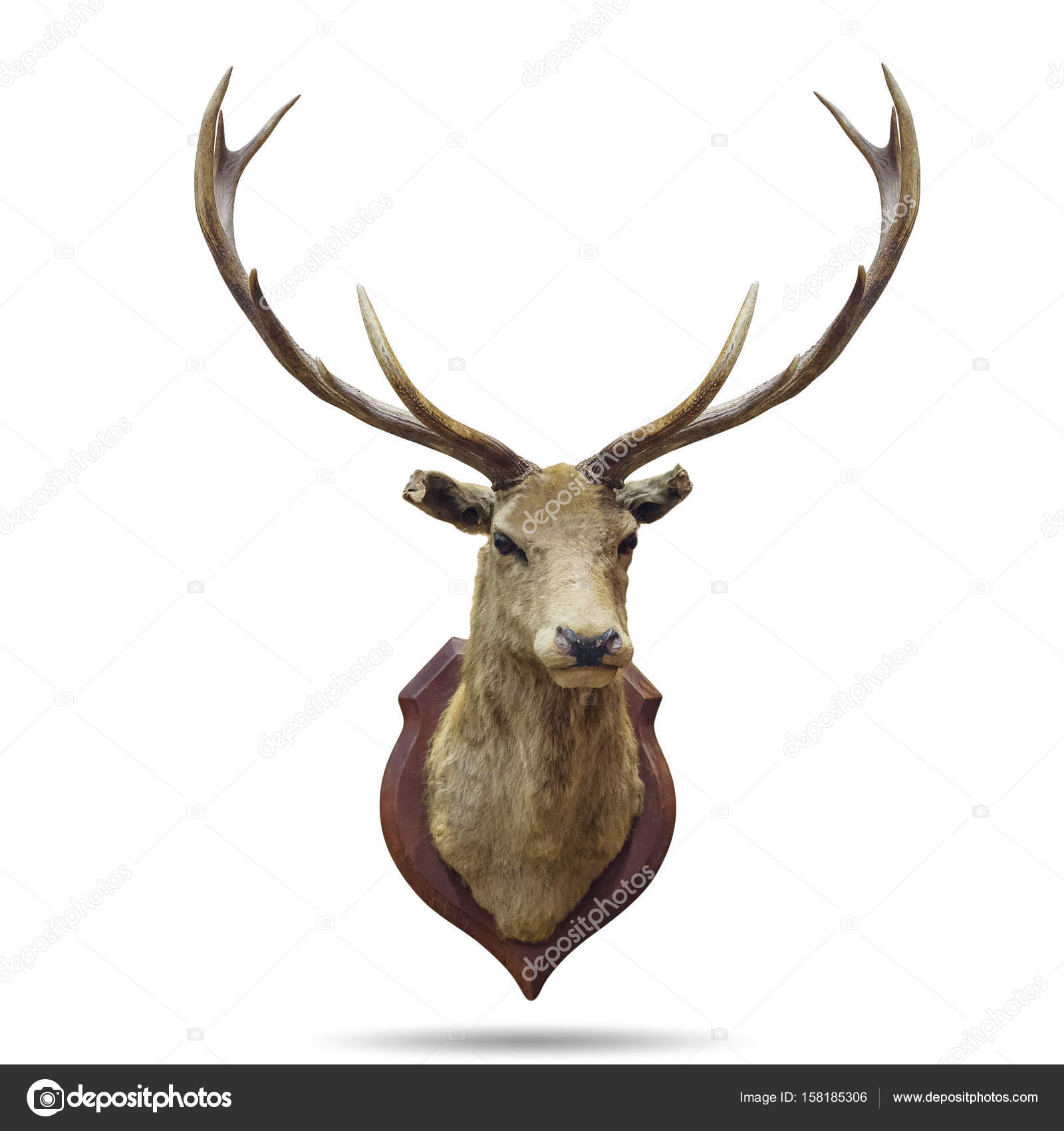 cabeza de ciervo disecado — Foto de stock © nirutdps #158185306