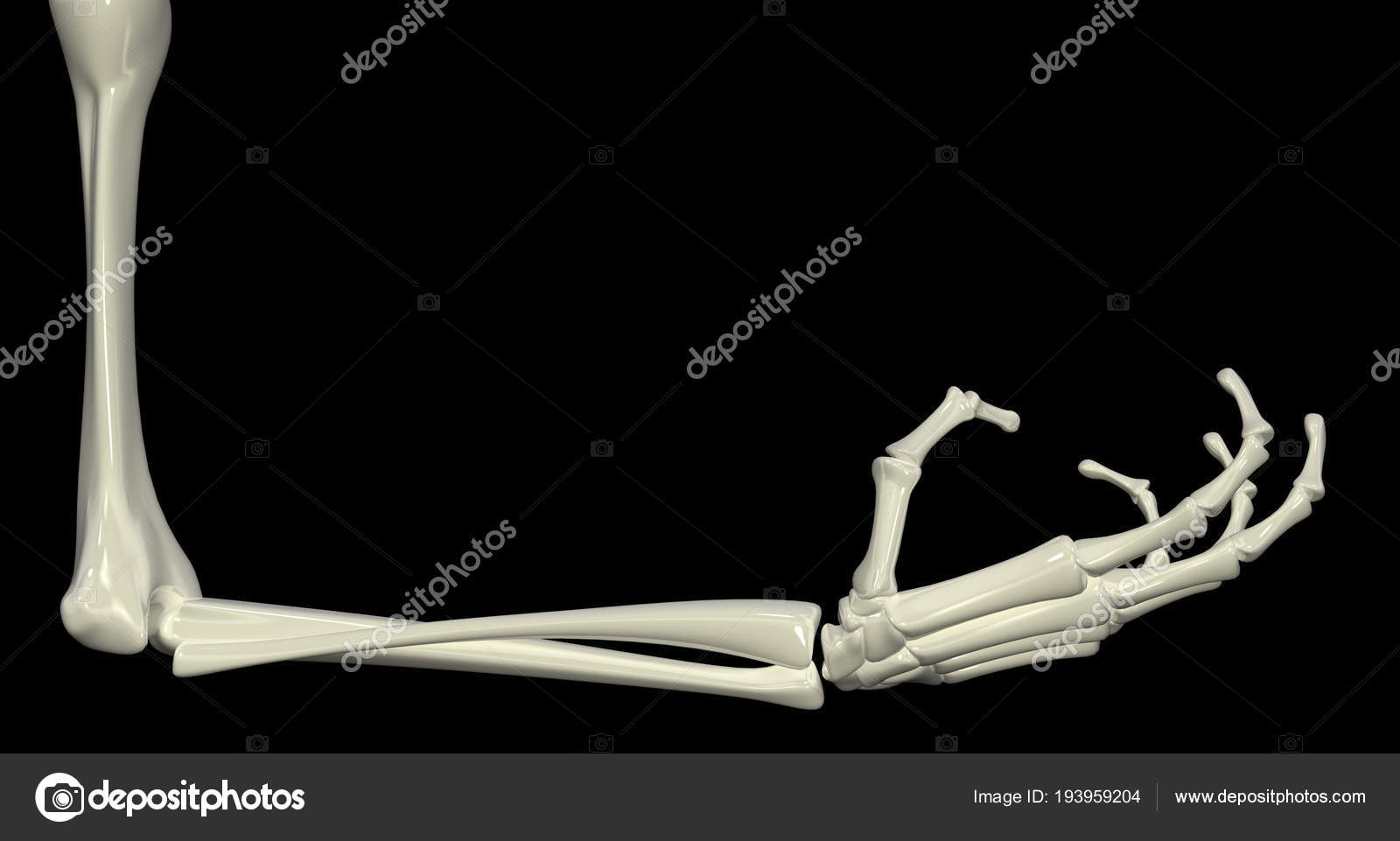Skeletal Arm Right Angle Stock Photo Higyou 193959204