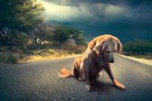 Fotografie abandoned dog in the middle of the road /