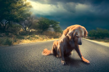 abandoned dog in the middle of the road /