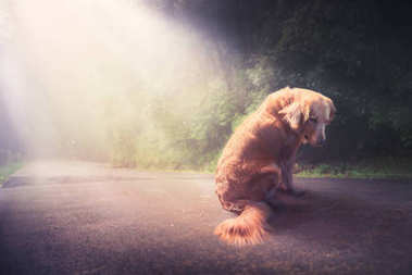Sad, abandoned dog in the middle of the road ,high contrast image