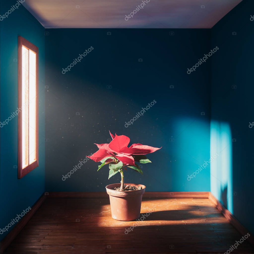 Poinsettia in a square room with dramatic lighting
