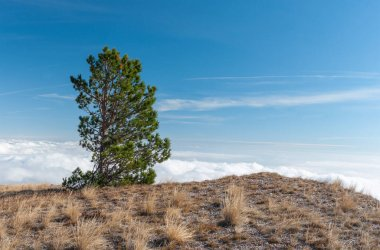 Autumnal landscape with lonely pine tree on Babuhan Yaila natural reserve in Crimean peninsula