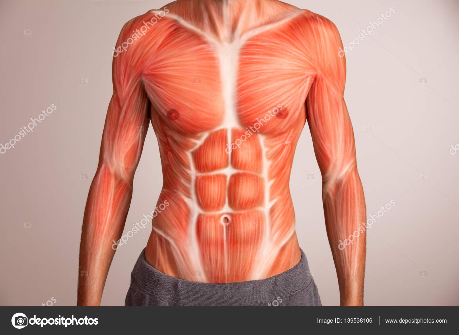 Mann-Oberkörper-Muskulatur — Stockfoto © artstudio_pro #139538106
