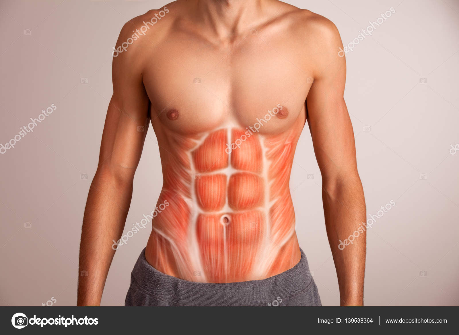 Menschlichen Bauchmuskel — Stockfoto © artstudio_pro #139538364