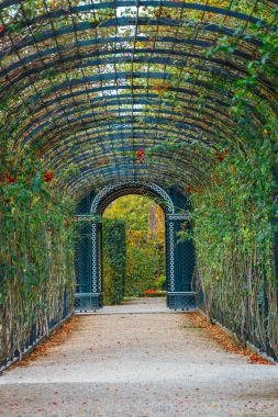 """Картина, постер, плакат, фотообои """"романтический сад дорожки, образуя зеленый тоннель акации в Вене, Австрия"""", артикул 167289780"""