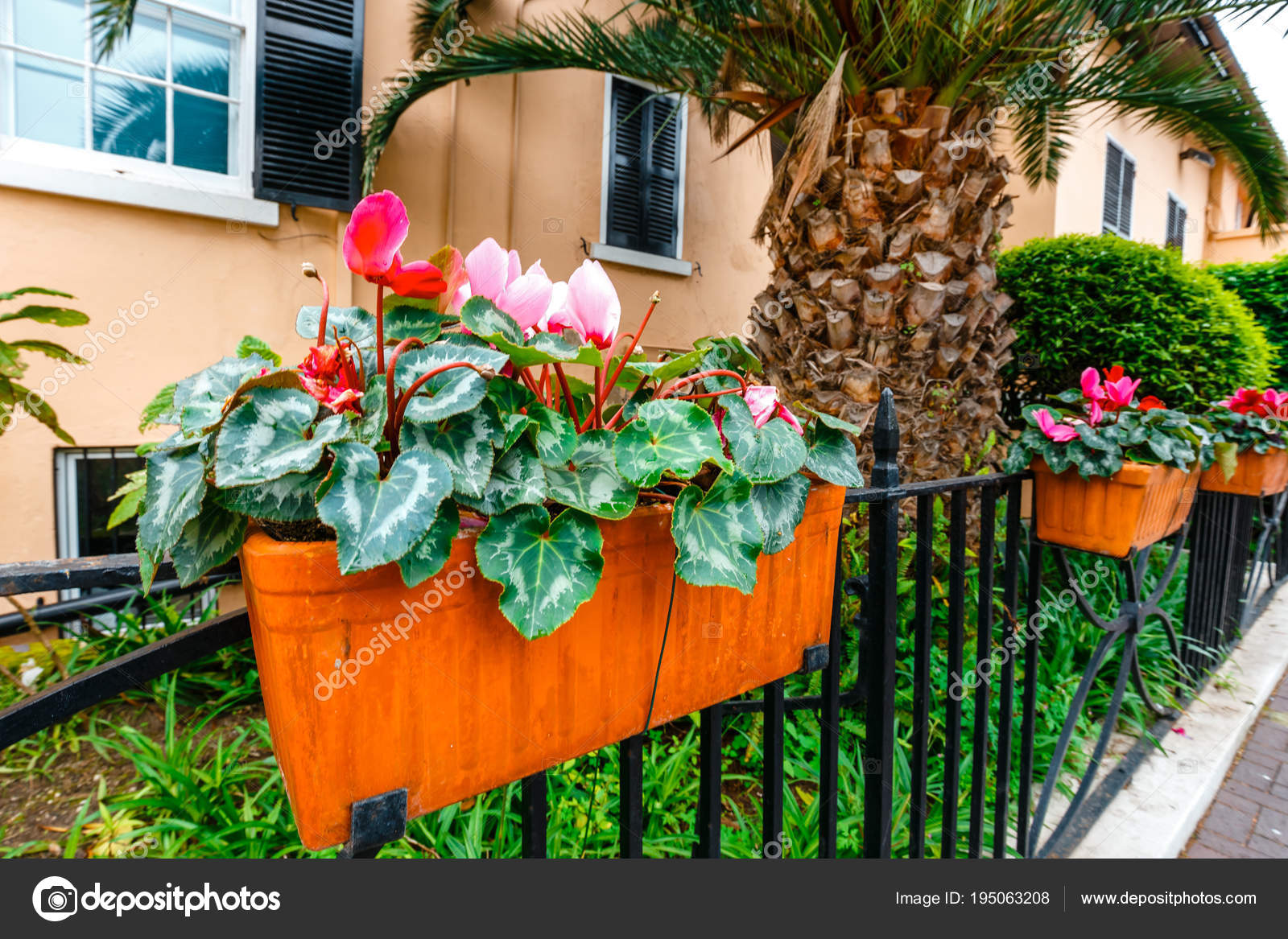 Potted spring flowers on a fence close up stock photo potted spring flowers on a fence close up stock photo mightylinksfo