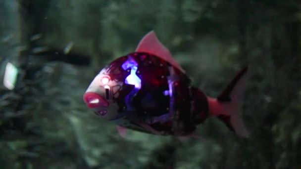 Roboterfische schwimmen im Aquarium.