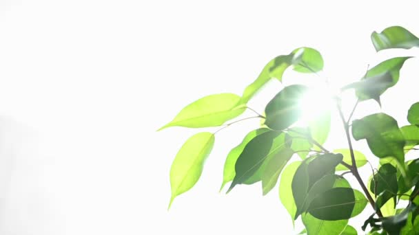 Eco-friendly concept, bright sunlight through green leaves.