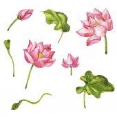 Fotografie Malba akvarel wild pink Lotus květiny vzor bezešvé na bílém pozadí