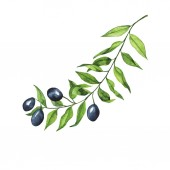 Photo Olive branch isolated on white background. Hand drawn watercolor illustration.
