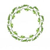 Fotografie Grüne Feder Zweig runder Rahmen isoliert auf weißem Hintergrund. Handgezeichnete Aquarell Abbildung