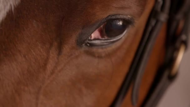 Close up slow motion clip of the eye of a racehorse