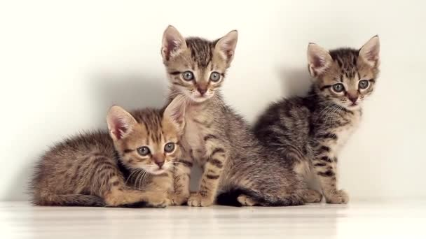 kittens against a white screen