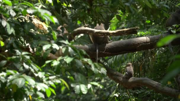 Kleiner Affe läuft und springt zwischen Ästen